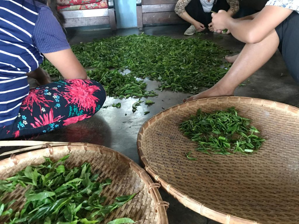 Fresh Leaves Sorting